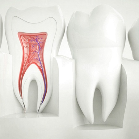 Model of inside of tooth